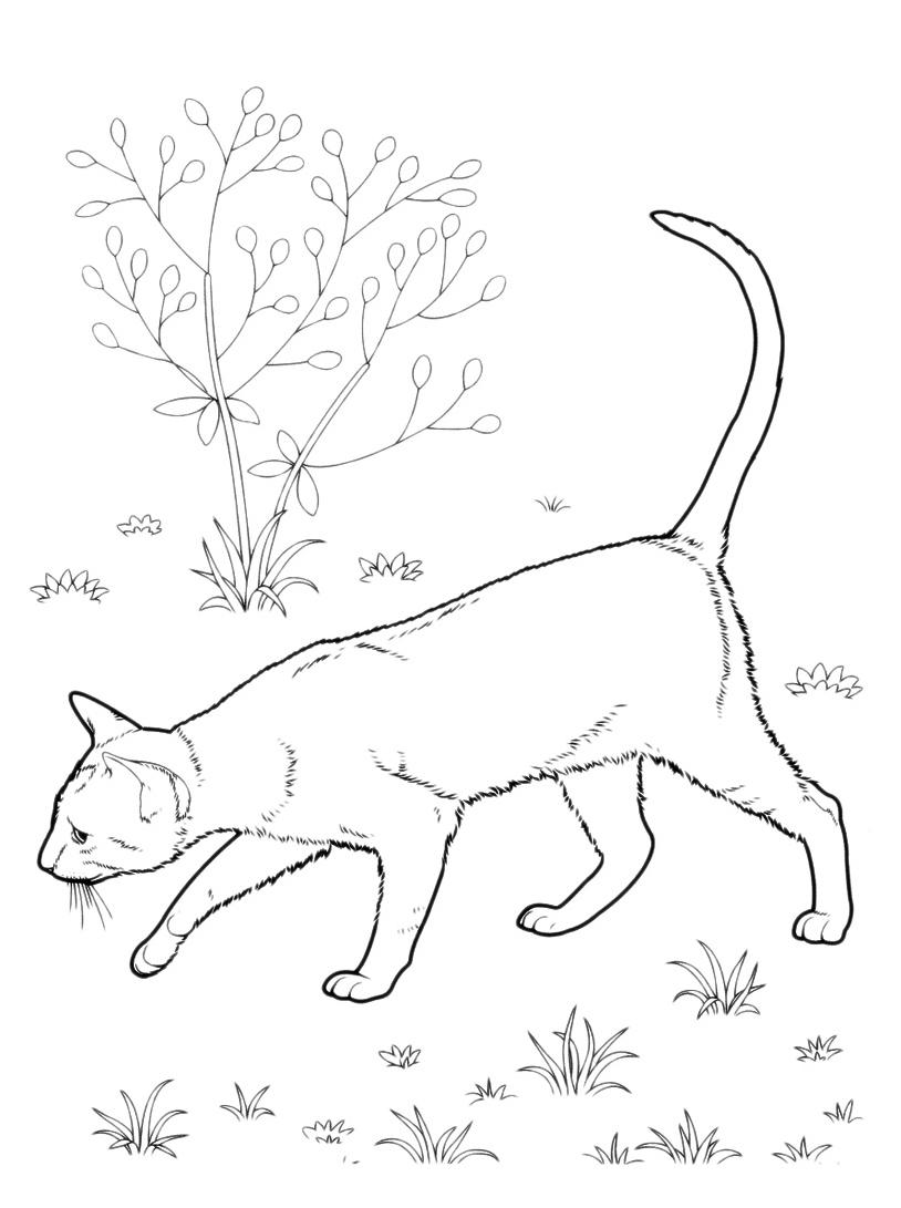 Gatto da colorare 36