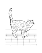 Gatti da colorare 41