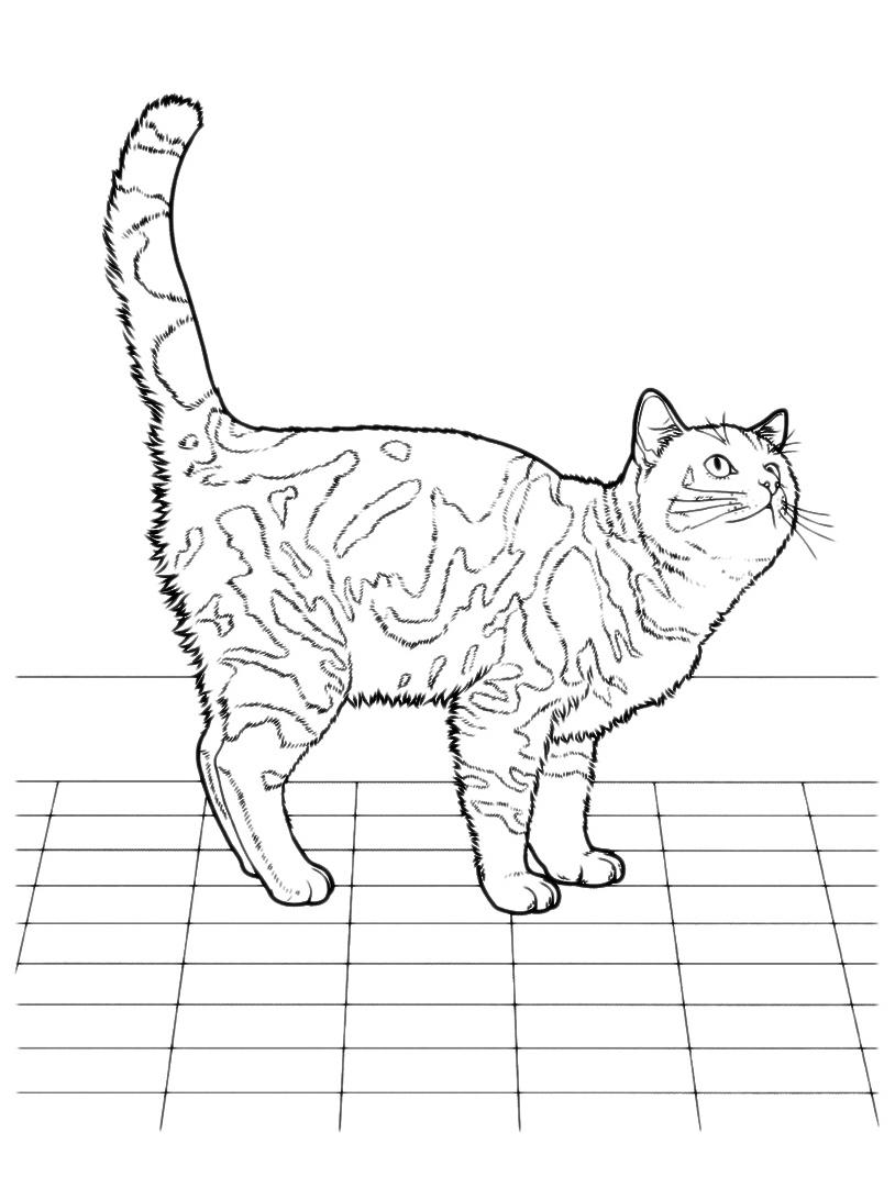 Gatto da colorare 40