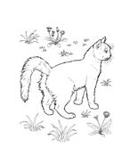 Gatti da colorare 42