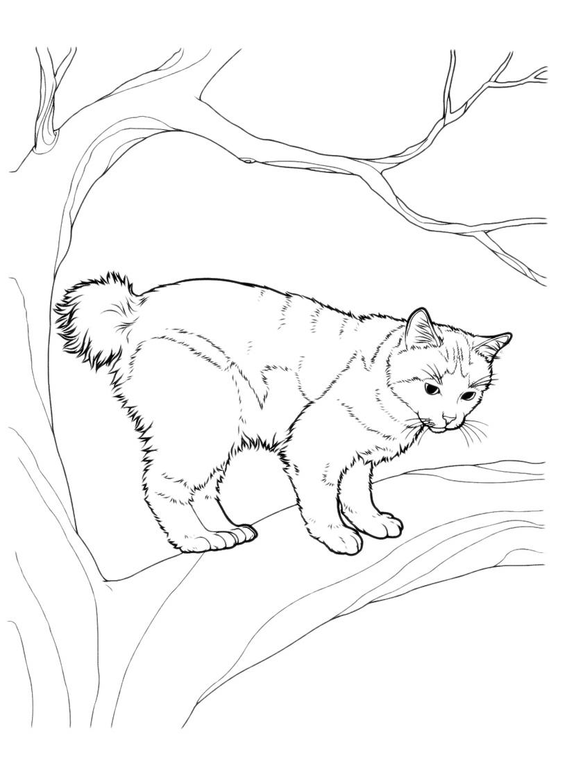 Gatto da colorare 52