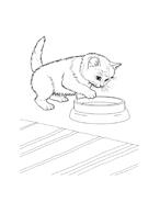 Gatti da colorare 64