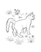 Gatti da colorare 68