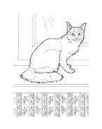 Gatti da colorare 69