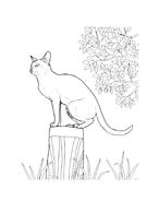 Gatti da colorare 70