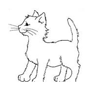 Gatti da colorare 82