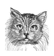 Gatti da colorare 114