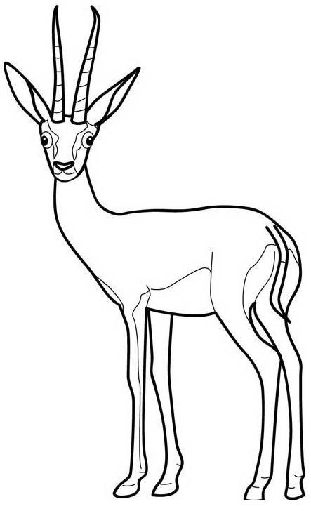 Animale da colorare 138
