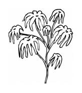 Fiore da colorare 279