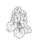 Fiore da colorare 283