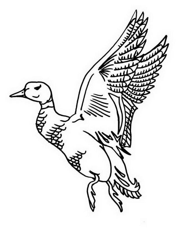 Uccello da colorare 162