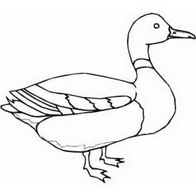 Uccello da colorare 163