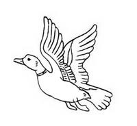 Uccello da colorare 166