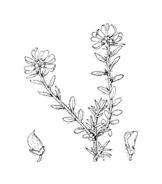 Fiore da colorare 291