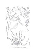 Fiore da colorare 293