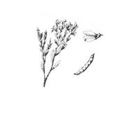 Arbusto da colorare 24