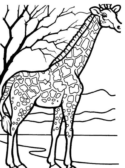 Giraffa da colorare 32