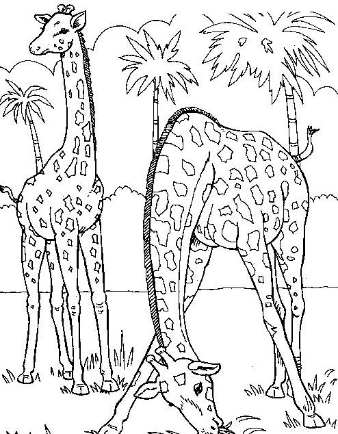 Giraffa da colorare 35