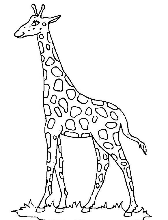 Giraffa da colorare 40