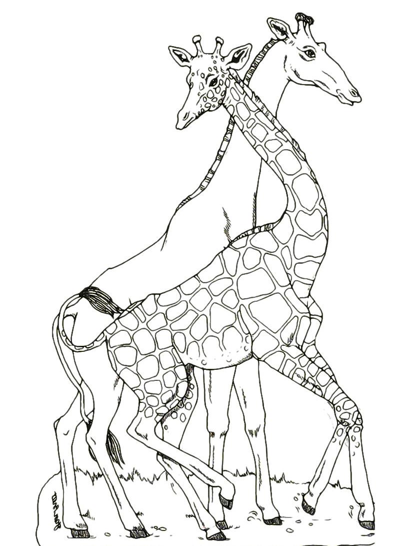 Giraffa da colorare 46