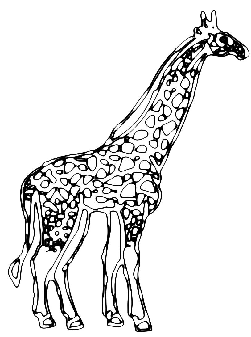 Giraffa da colorare 56