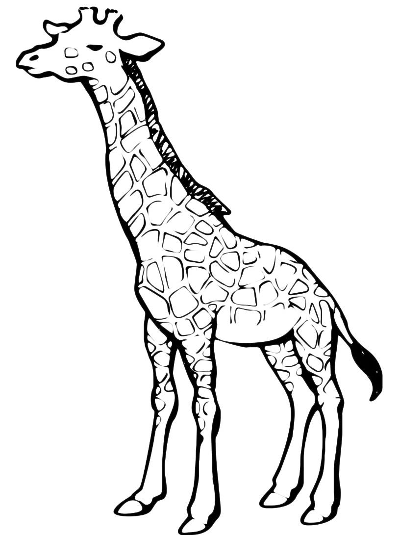 Giraffa da colorare 61