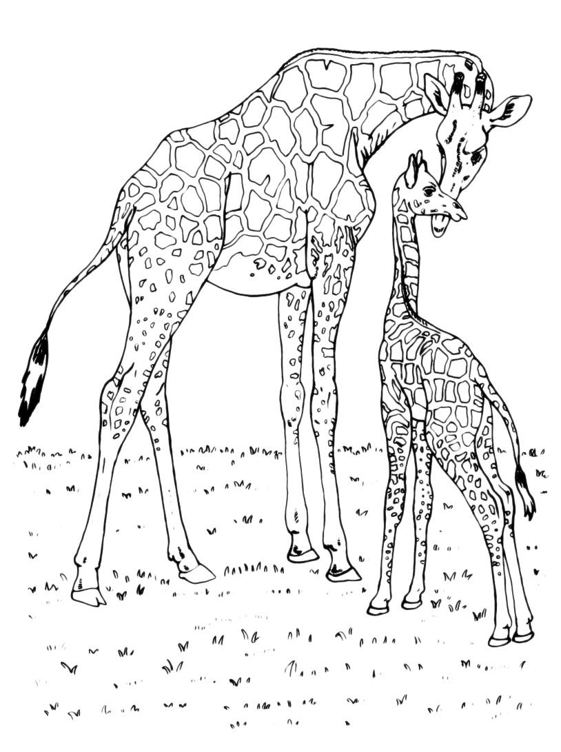 Giraffa da colorare 70