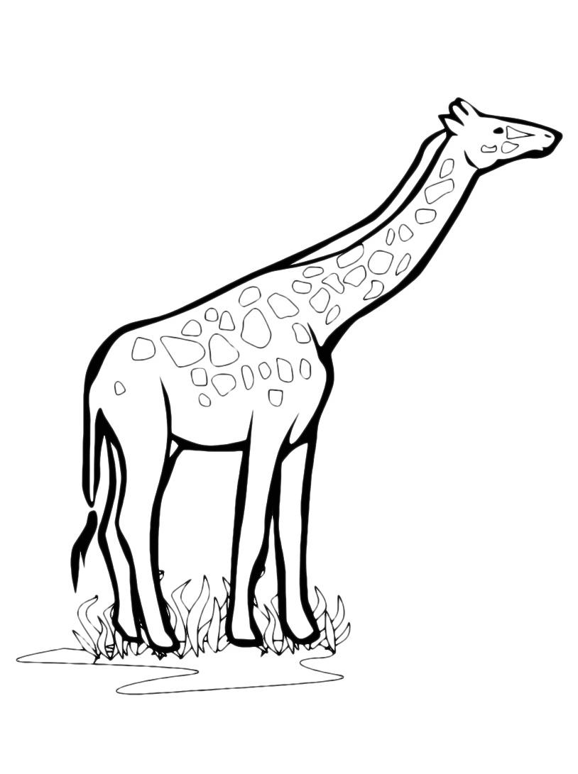Giraffa da colorare 73