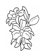 Fiore da colorare 296