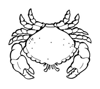 Crostaceo da colorare 26