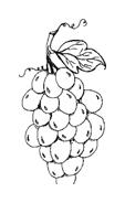 Frutto invernale da colorare 28