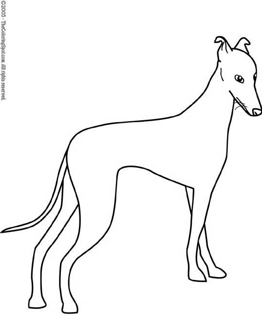 Cane da colorare 203