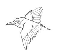 Uccello da colorare 173