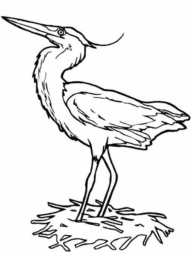 Uccello da colorare 176