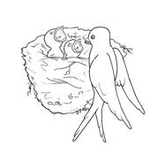 Uccello da colorare 177