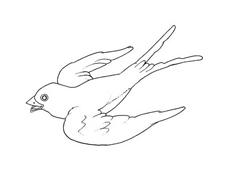 Uccello da colorare 178