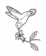 Uccello da colorare 180