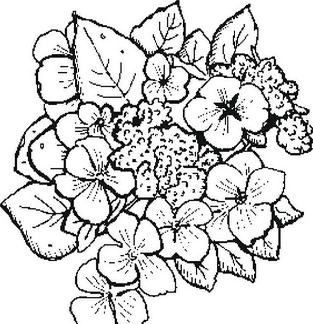 Verdura da colorare 43
