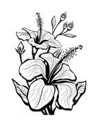 Fiore da colorare 306