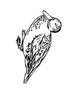 Uccello da colorare 182