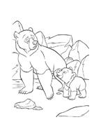Koda fratello orso da colorare 81