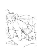 Koda fratello orso da colorare 164
