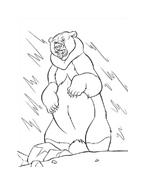 Koda fratello orso da colorare 219