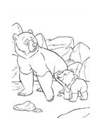 Koda fratello orso da colorare 223