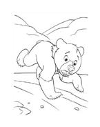 Koda fratello orso da colorare 244
