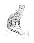 Leopardo da colorare