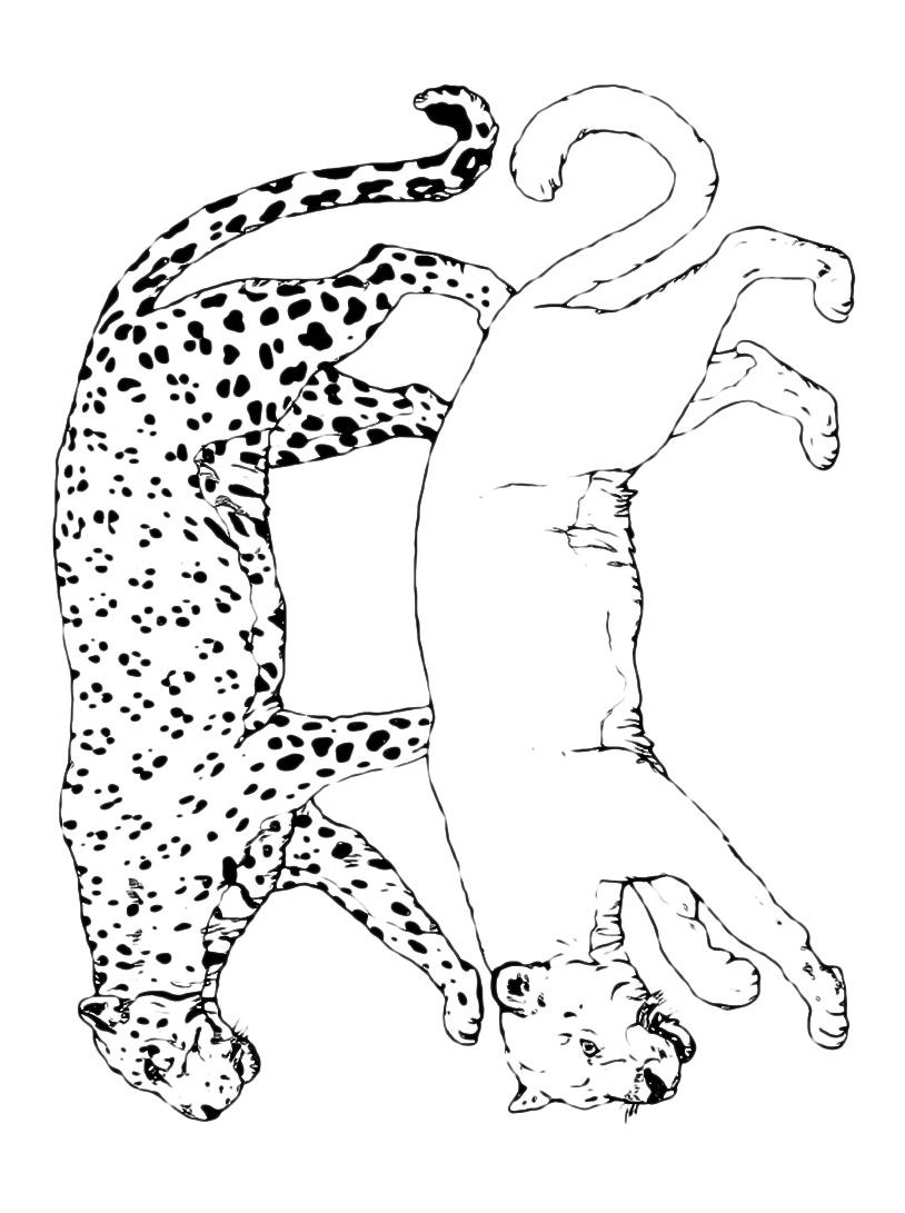 Leopardo da colorare 6
