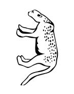Leopardo da colorare 8