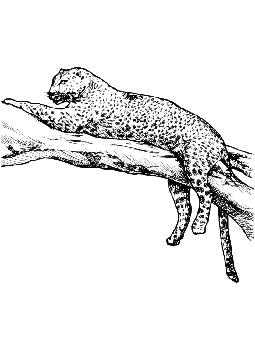 Leopardo da colorare 15
