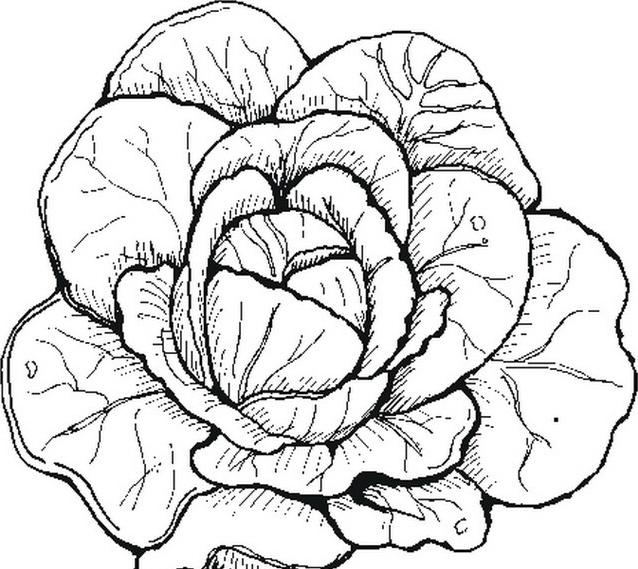Verdura da colorare 45